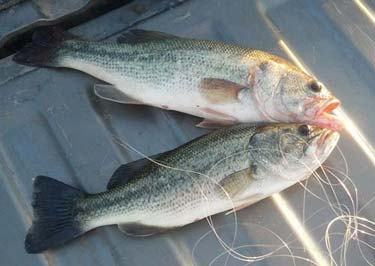 Tibf conservation page for Lake lowell fishing